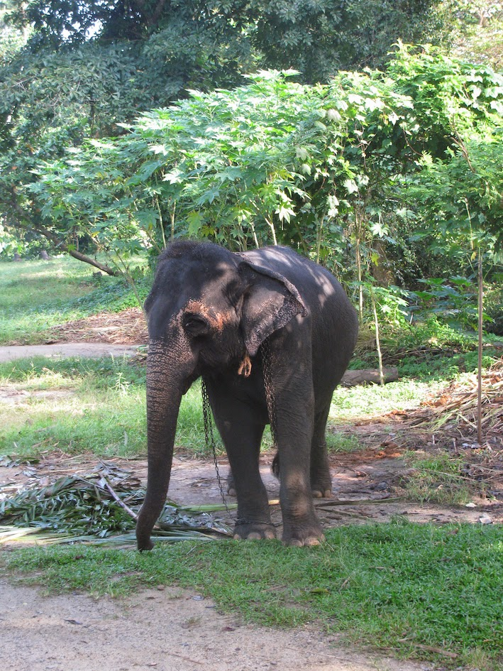 Millennium Elephant Foundation: Young member of the family