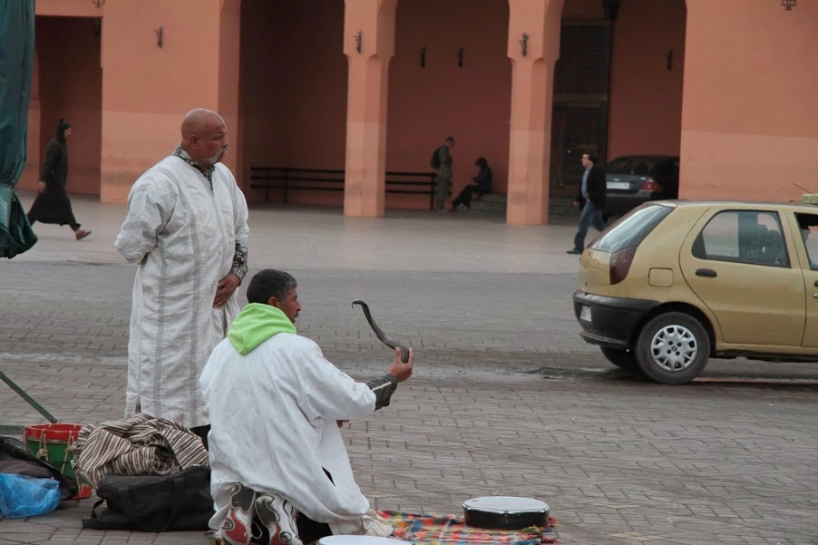 Marrakech: Snake charmer at Djemma El Fna