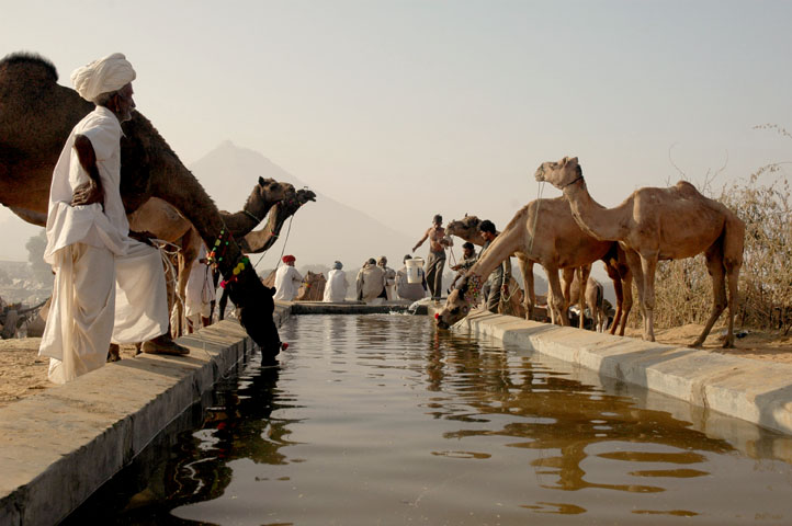 Pushkar Fair (pic courtesy : Koshy Koshy - Wikipedia)