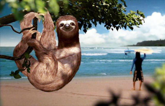 Talking sloth
