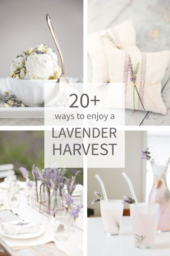 20 Ways to Use Lavender