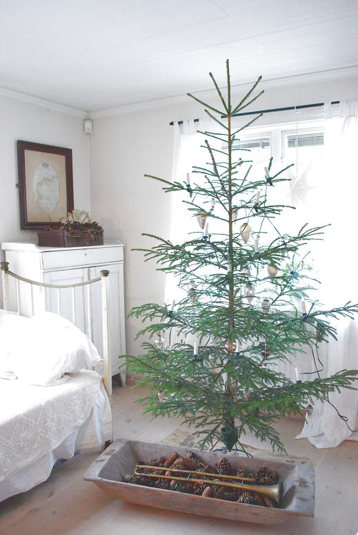 Where To Buy Real Christmas Trees