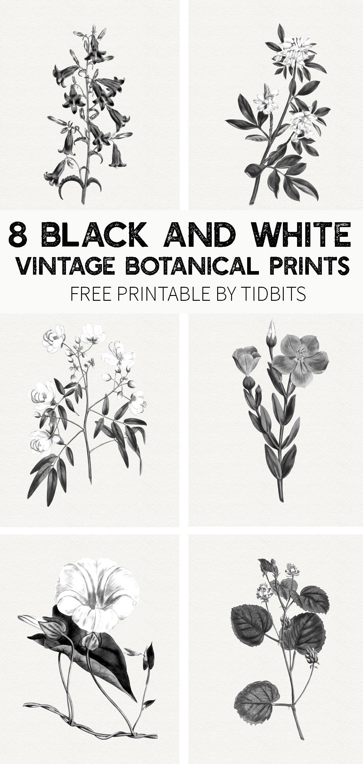 Free Black And White Vintage Botanical Prints Tidbits