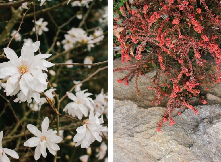 atlanta-botanical-garden-6a
