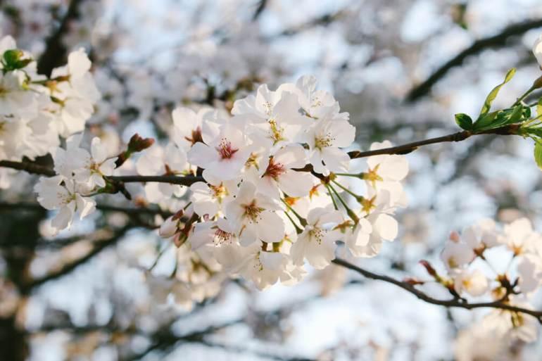 atlanta-march-flowers-2016-9a