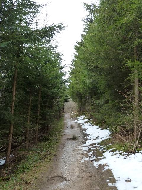 Waldweg am Auerberg