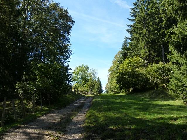 Wanderweg vom Senkelekopf zur Alpe Beichelstein