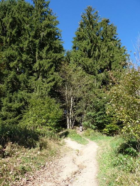 Schwarzer Grat - Aufstieg durch den Wald