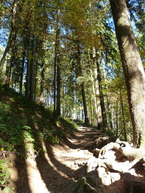 Schwarzer Grat - Wald-und-Wurzel-Weg
