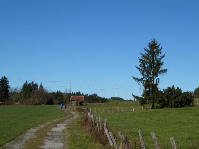 Bergmang-Alpe-Weg-2