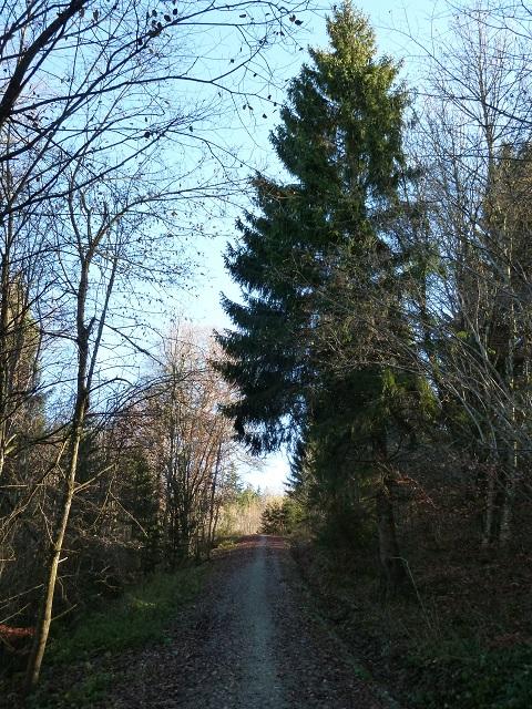 Bergmang-Alpe-Weg-4