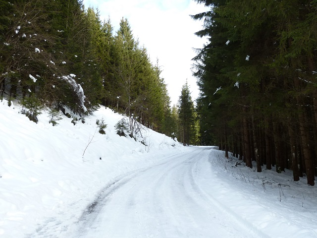Bad Hindelang - Winterweg durch den Bergwald am Imberger Horn