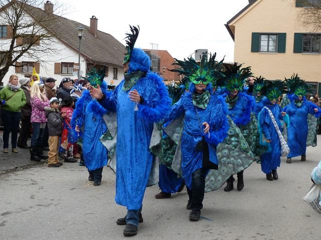 Gruppe blauer Pfauen