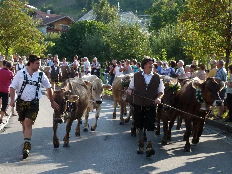 Viehscheid Kranzegg 2016 - Alpe Bommer Ebene