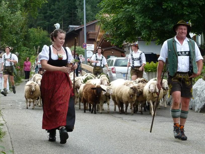 Viehscheid Kranzegg 2016 - Schafherde