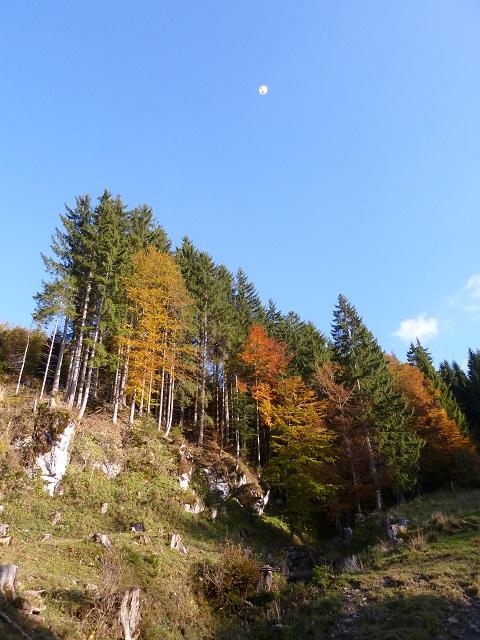 Herbstlicher Bergwald am Grünten