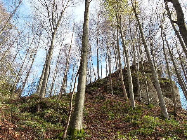 Frühlingswald in der Teufelsküche bei Obergünzburg