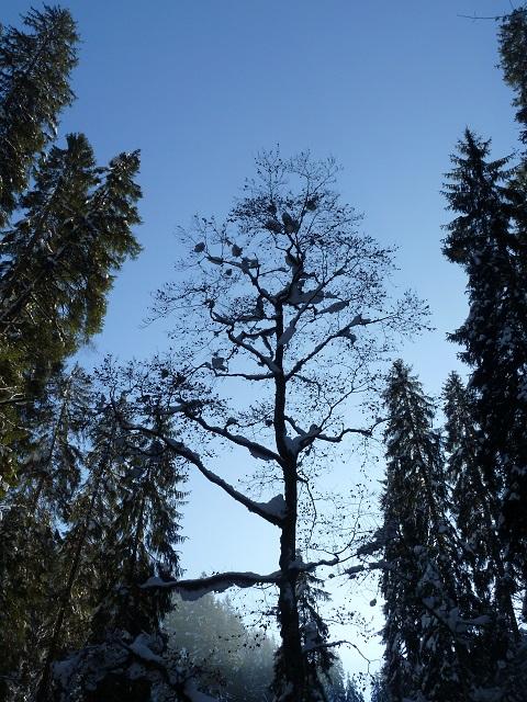 Baumskulptur in der winterlichen Breitachklamm