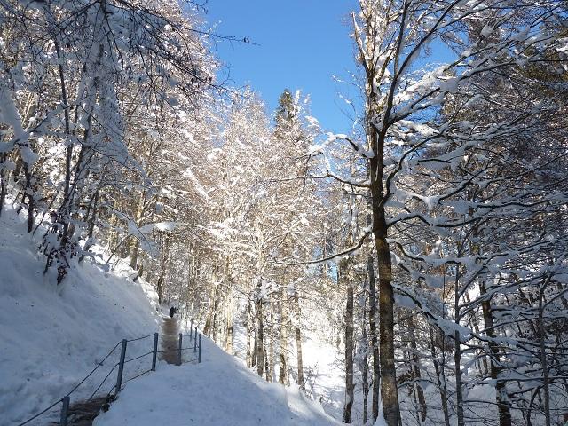 Weg durch den Winterwald zur Alpe Dornach