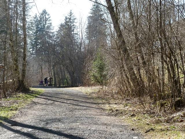 Waldweg zum Naturerlebnispfad Görisried