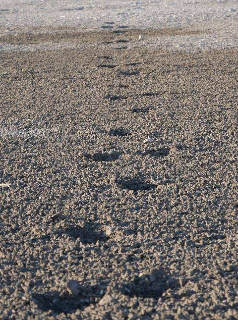 Fußspuren auf dem Grund des Forggensees