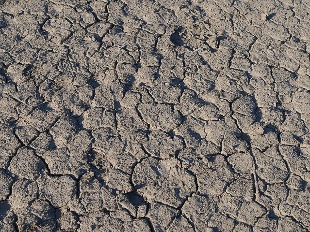 Lehmstruktur auf dem Grund des Forggensees