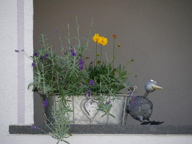Metallblumentopf mit lustigem Vogel