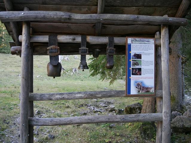 Kuhschellen zum Probeläuten am Erlebnisweg Uff d'r Alp