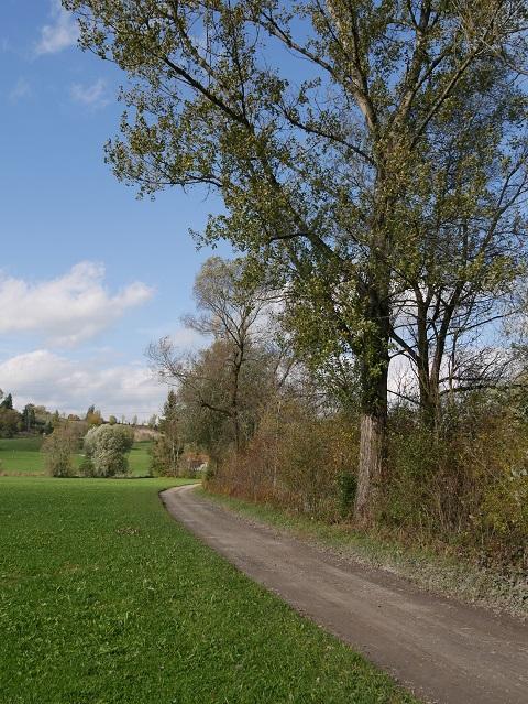 Iller-Radweg bei Martinszell