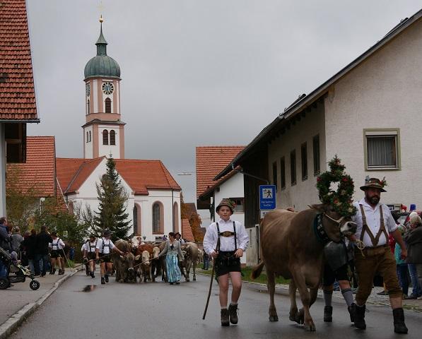 Kranzrind und Herde auf dem Weg durchs Dorf