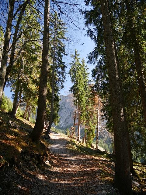 Auf dem Rundwanderweg Seealpe am Nebelhorn