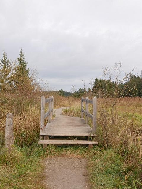 Brücke am Beginn des Holzbohlenwegs am Elbsee-Moor