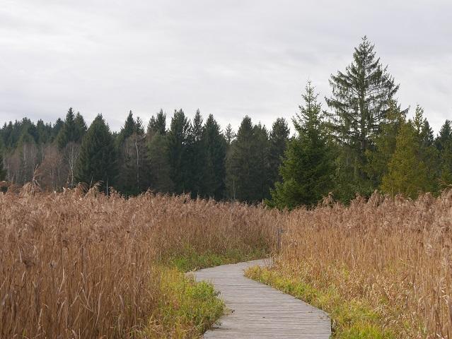 Steg durchs Moor auf der Wanderung rund um den Elbsee
