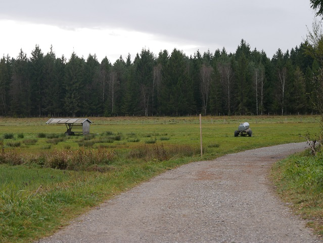 Viehweide am Elbsee-Rundweg