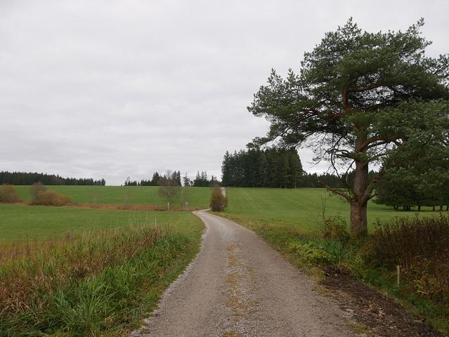 Wanderung rund um den Elbsee - vom See hinauf zum Waldrand