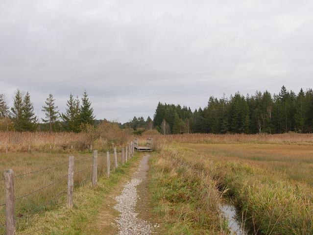 Weg zur Holzbrücke am Elbsee-Moor
