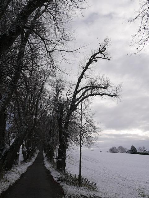 Winterlich kahle Bäume im Schnee