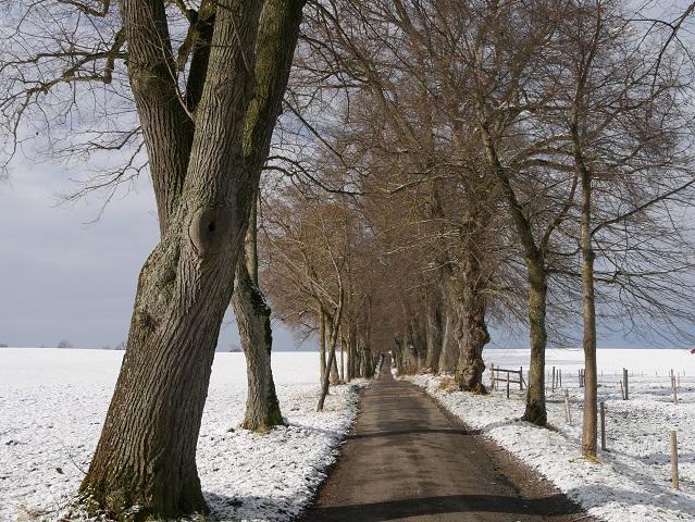 Kurfürstenallee in der Wintersonne