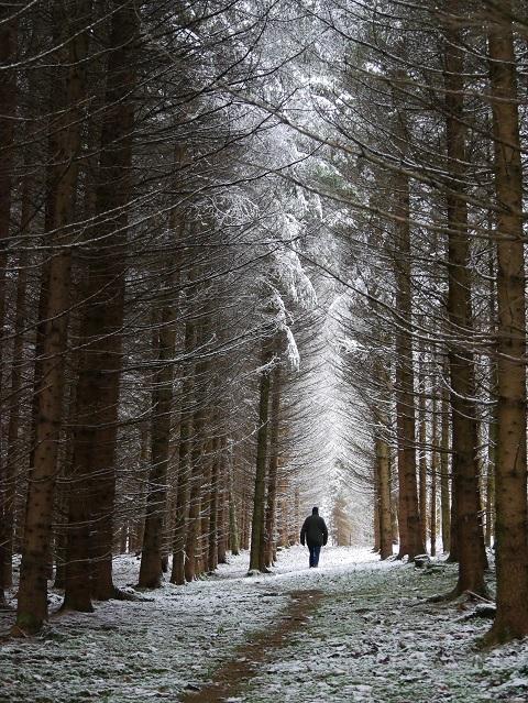 Spaziergänger im Winterwald