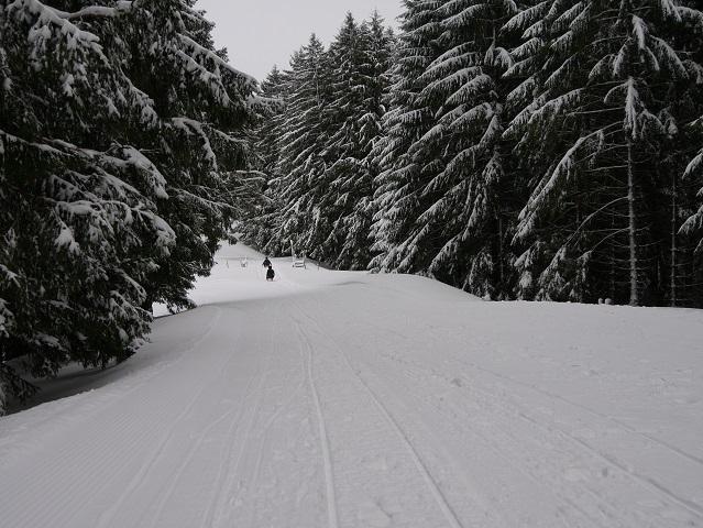 Rodeln von der Gundhütte durch den Winterwald