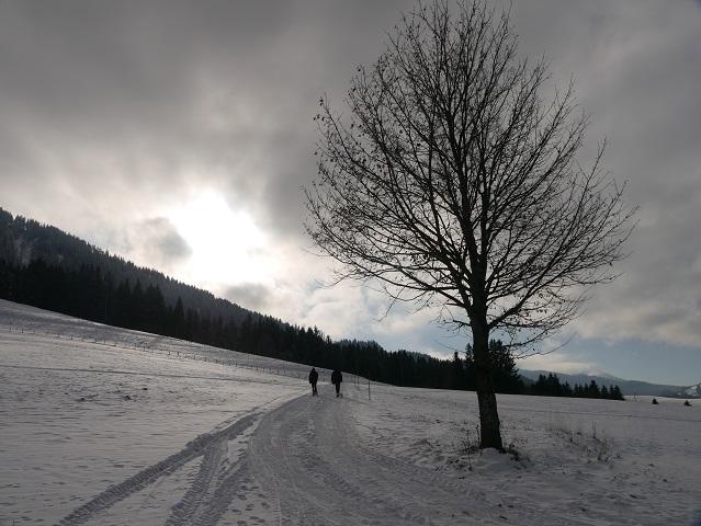 Schlittenfahren im Allgäu - auf dem Weg zur Buron-Hütte