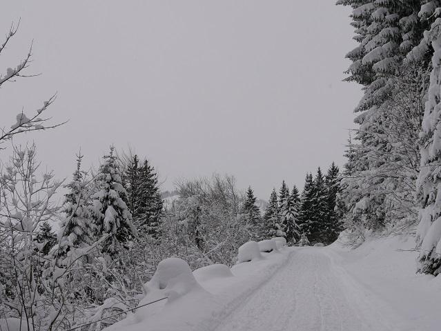 Weg zur Buchel Alpe im Winter