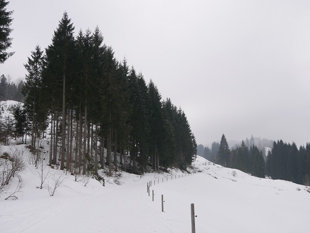 Winterwandern im Gunzesrieder Tal - Weg zur Alpe Rappengschwend