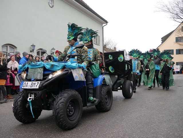 Stolze Pfauen auf dem Faschingsumzug Obergünzburg 2018