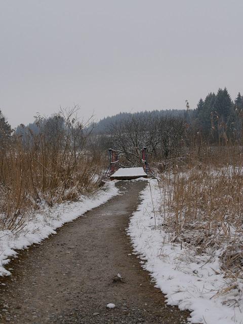 Spazierweg durchs Elbsee-Moor im Winter