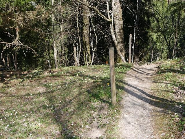 Pfad von der Kronenhütte zum Wasserfallweg