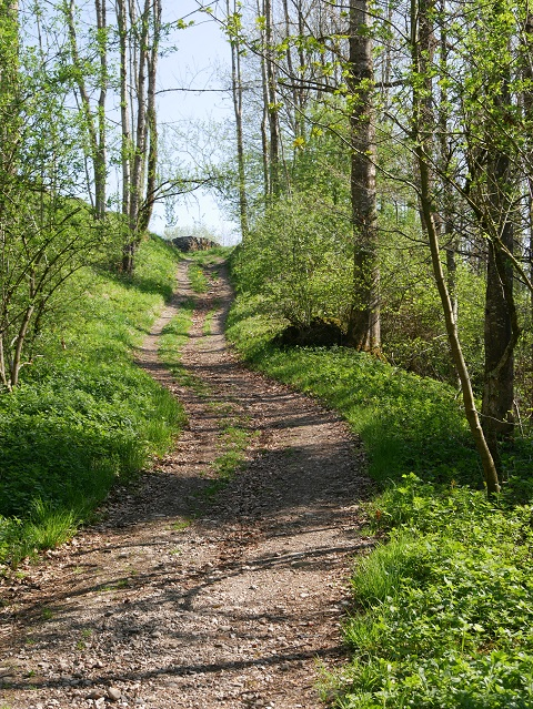 Weg zur Burgruine Wolkenberg