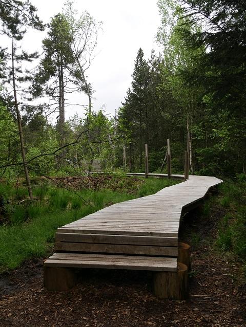 Holzsteg im Werdensteiner Moos