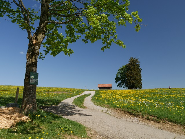 Abzweigung am Panoramaweg Oy-Mittelberg