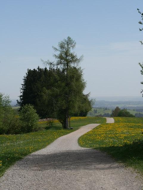 auf dem Panoramaweg Oy-Mittelberg im Frühling